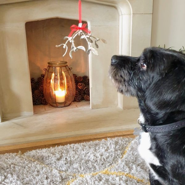 Petwer mistletoe hanging infront of a fireplace with a black dog looking up at it